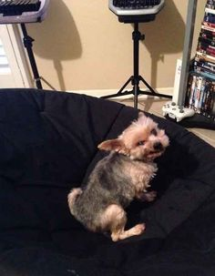This farting dog. | 29 Dogs You Won't Believe Actually Exist