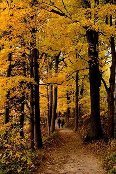 Autumn stroll along the escarpment (Hamilton, Ontario) by Lorraine A Booker  / 500px