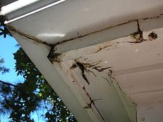 water damage from gutters