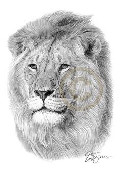 pencil-drawing-lion-big-cat-artwork.jpg (1000×1414)