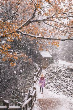 Shirakawago Snow November 1