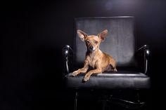 11_Dog_Portraits_Pet_photography_Denver_Studio-2679.jpg