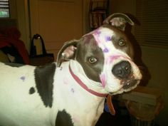 paw painting was a bit messy..