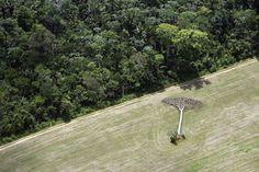 September 16, 2013. Brazil. Aerials from Manaus to Santarem. Photo by Daniel Beltra for Greenpeace