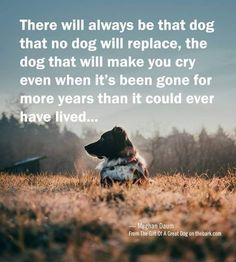 New dogs love quotes fur babies people Ideas Dog Best Friend Quotes, Dog Quotes Love, Best Friends, Pet Quotes, Quotes About Dogs, Losing A Dog Quotes, Dog Qoutes, Dog Passing Quotes, Love For Animals Quotes