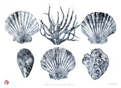 Cornish Shells Rubbing by Padstow artist Susie Ray | Japanese print technique: ink up the object, apply paper (wetted?), gently rub over back of paper with fingers, carefully peel away paper to reveal print.
