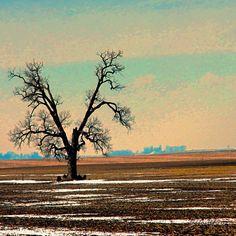A most interesting shaped tree! - @Frank LeFevre- #webstagram