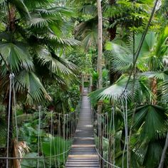 Timog: Forest and hanging bridge in Davao