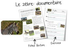 Fiche doc : Le zèbre Encore une fiche sur les animaux d'Afrique ! Je continue mon tour du monde avec les animaux que Loup rencontre : ici Voici donc la fiche documentaire et les exerci…