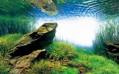 Stones : Aqua Forest Aquarium, ADA USA, Aqua Design Amano