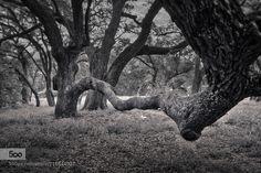 Trees Hand