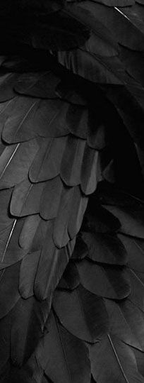 ☾ Midnight Dreams ☽  dreamy & dramatic black and white photography - black feathers