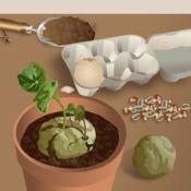 Fabriquer et lancer des bombes de graines