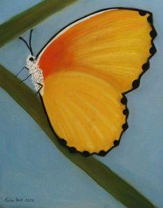 Mariposa  Técnica Pastel en papel Canson A4