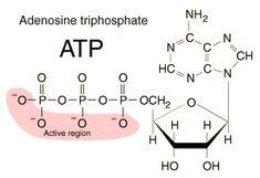Adenosine Triphosphate: What is it?