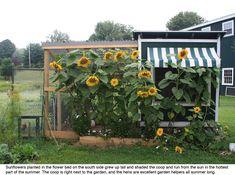 landscaping around a chicken coop | Please Post Your Pics Of Landscaping Around Your Coop. - Page 4