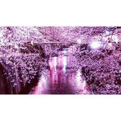 この画像は「〈 For 働きマン 〉アフター8でも夜桜を見に行こう。5つの東京の名所で春の魅力にくびったけ」のまとめの20枚目の画像です。
