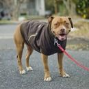 Canine Carhartt Coat ---- DIY dog sweater / coat from human hoodie.