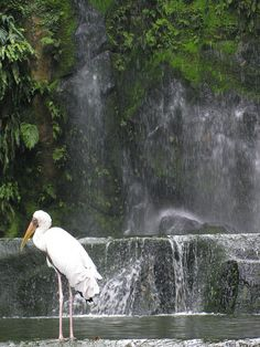 A picture of the waterfall from when i visited the KL bird park for the 3rd time back in July 2011. Considering it was so hot, the mist of the fall was a welcomed relief!❤️