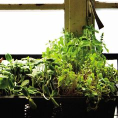 The Easy, 4-Step Plan to Growing Kitchen Herbs That Won't Die