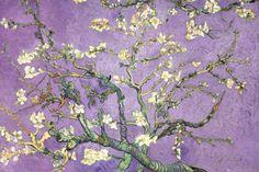 Purple Almond Blossoms Poster