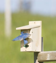 Bluebird house plans   Birds of a feather   Pinterest   Bluebird     Duncraft com  Duncraft WSB Eastern Bluebird House   Endorsed by the North  American Bluebird