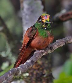Rainbow hummer