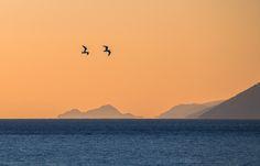 https://flic.kr/p/Ckuv4Q   Flying at sunset