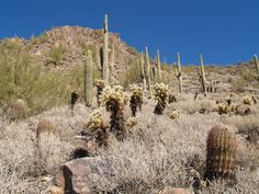 Jumping Cactus, Cave Creek Arizona, Tour Tickets, Cacti, Faeries, Regional, 2 In, Monument Valley, Trip Advisor