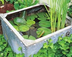 Garden water features can be hard to install so why not try a easy alternative and make yourself a pond in a pot.