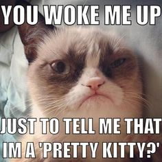 You woke me up just to tell me that I'm a pretty kitty?!