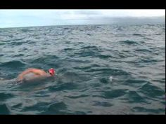 Adam Walker, an experienced long-distance open water swimmer, was on a 16-mile journey through the Cook Strait in New Zealand when he spotted a shark below him. Luckily, a pod of dolphins was nearby, and acted as his guards for the next hour of his swim. | A Pod Of Dolphins Swam With This Man For Over An Hour To Protect Him From A Shark