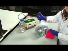 Western Blot Visual Protocol: Phase 2: Protein Electrophoresis (SDS-PAGE)