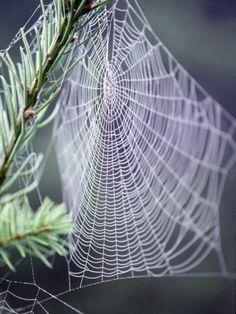 Cave Webs