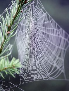 Spider Webs and Dew Drops.The tensile strength of spider silk is greater than the same weight of steel and has much greater elasticity. Its microstructure is under investigation for potential applications in industry, including bullet-proof vests and artificial tendons.