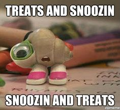 Marcel The Shell love this...reminds me of my girls in the PICU