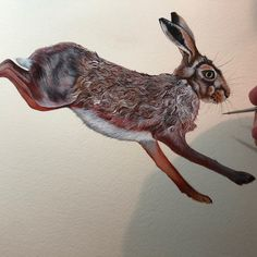 Watercolour of brown hare leaping. #hare #brownhare #hareart #hares #haresinart Sam Cannon, Hare, Colored Pencils, Pencil Drawings, Watercolour, Paintings, Brown, Animals, Colouring Pencils