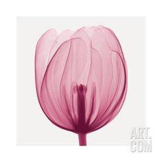Tulips A (Positive) Lámina giclée by Steven N. Meyers at Art.com