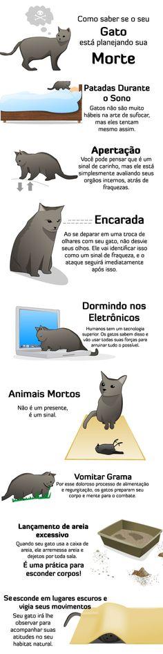 Cuidado com seu gato