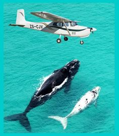 Whale watching at De Hoop Nature Reserve, Western Cape