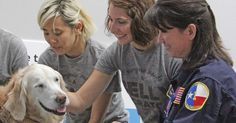 Last Rescue Dog From Ground Zero Gets A Day To Remember In NYC via LittleThings.com