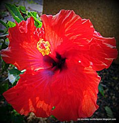 I would stop & admire the beautiful flowers found in Hawaii & take some pictures of them #pinhawaii