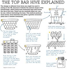 The Top Bar Hive Explained