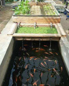 Aquaponics System, Aquaponics Greenhouse, Aquaponics Fish, Fish Farming, Diy Greenhouse, Hydroponic Gardening, Gardening Tools, Organic Gardening, Gardening Gloves