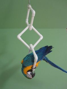 Keeping birds as pets or to rear for breeding comes with a certain amount of responsibility and basic knowledge. It is important to keep pets well feed and above all comfortable in their environment. When it comes to birds, it is impo Diy Parrot Toys, Diy Bird Toys, Diy Macaw Toys, Parrot Stand, Bird Stand, Parrot Perch, Bird Perch, Cockatoo Toys, Budgie Toys