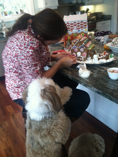 Tibetans can help in the kitchen! This owner is receiving direction on exactly where to place the candies.in his mouth! Tibetan Terrier, Jack Russell Terrier, Terriers, Candies, Haha, Friends, Dogs, Kitchen, Amigos