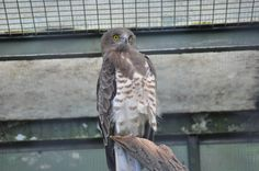 Zoo - Vienna Vienna, My Photos, Owl, Bird, Animals, Animales, Animaux, Owls, Birds