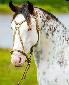 Pin by Anne on Pferde All The Pretty Horses, Beautiful Horses, Animals Beautiful, Cute Animals, Horse Photos, Horse Pictures, Horse Love, Horse Girl, Zebras