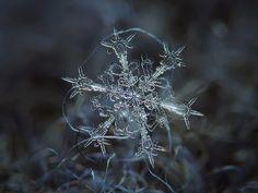 Asombrosas fotografías de copos de nieve | Notas | La Bioguía