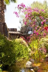 Boojum Tree's Hidden Gardens in Phoenix - Drew Brashler Photography Garden Pictures, Flower Pictures, Hidden Garden, Tree Wedding, Photo Tree, Garden Bridge, Botanical Gardens, Photo Galleries, Outdoor Structures